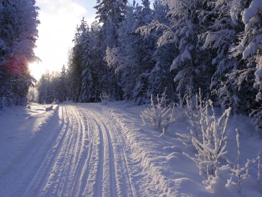 på vintern - Skidspår på ca 5km dras från stugan när snödjupet är tillräckligt.