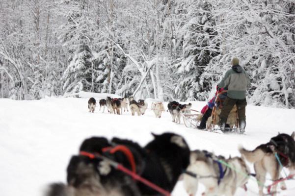 på vintern - Åk hundsläde