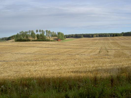 på sommaren - Enorma böljande åkrar som är vackert kuperade. Lär vara en av de största i Sverige!