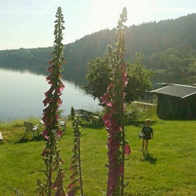 Utomhus - Utsikt över sjön i sommarskrud