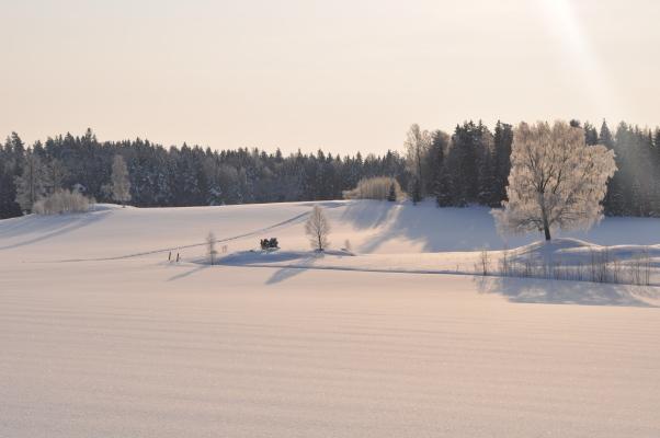 på vintern - på vintern