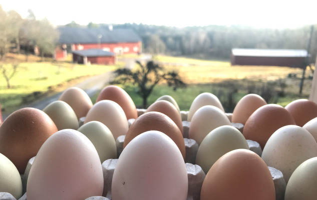 Other - Fresh eggs from the chicken!