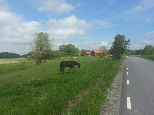 på sommaren - Close by is a farm with horses (renting is possible) and cattle.