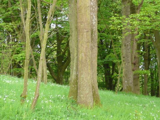 på sommaren - Bokskogen med vandringsleder