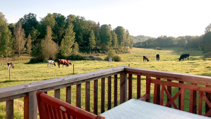 View summer - The cows graze just by the cottage.