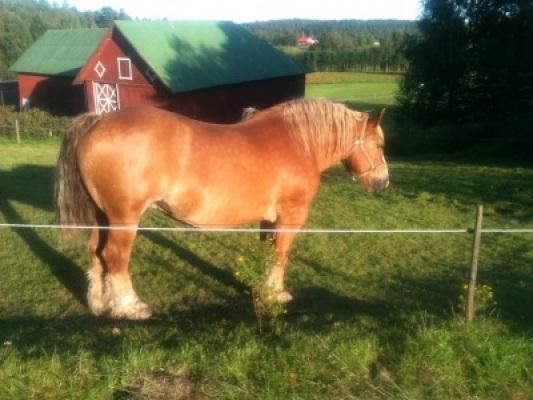 Omgivning - Grannes häst