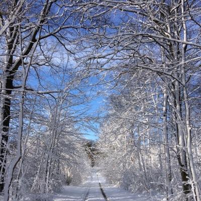 på vintern - Vinterväg till Gyllebosjön