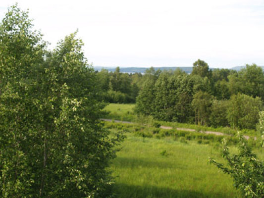 på sommaren - Sjön Fryken bakom träden.