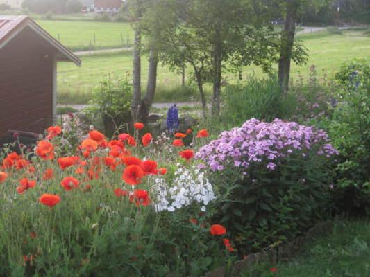 på sommaren - En bit av trädgården
