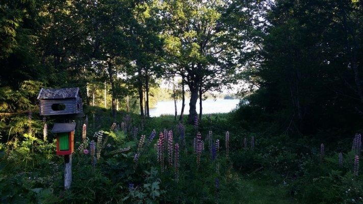 På sommaren - Utsikt mot sjön