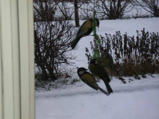 Kök - även fåglarna är hungriga