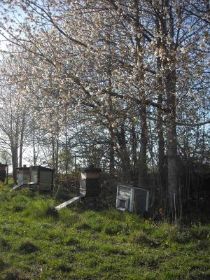 Utomhus - Vi har ett tiotal bikupor och säljer egenproducerad honung.