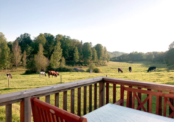 View summer - Cows graze just outside the cottage. The patio has outdoor furniture and a barbecue.