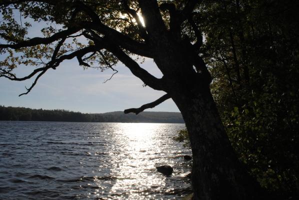Omgivning - sjön Halen, 250 m
