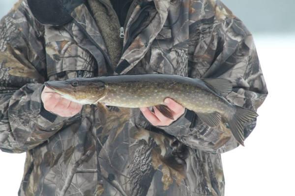 på vintern - Vinterfiske