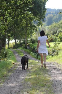 Utomhus - Härliga marker och fin natur, hundar är välkomna!