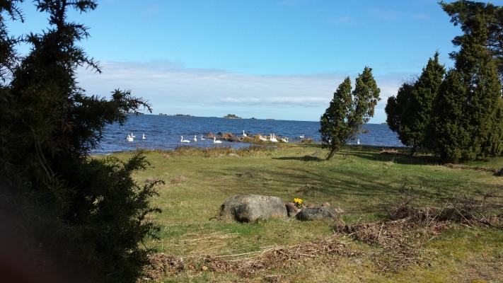 på sommaren - Bild från Saltorsudde. En halvö som sträcker sig 3 km ut i skärgården.