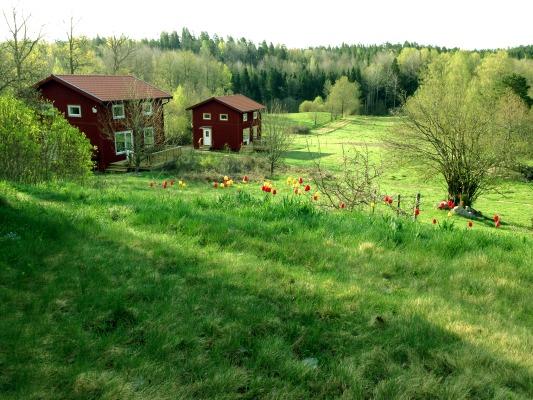 På sommaren - Två stugor i den böljande sluttningen på Häradssätter Gård.