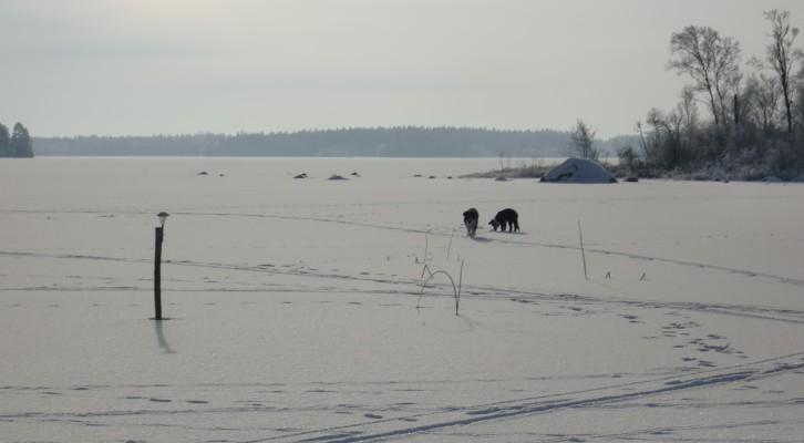 på vintern - Skärsjön vintertid.
