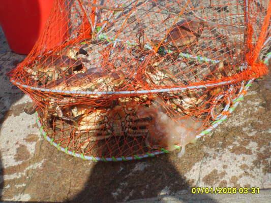 på sommaren - Så ser krabbfiskeredskapet ut som du får låna