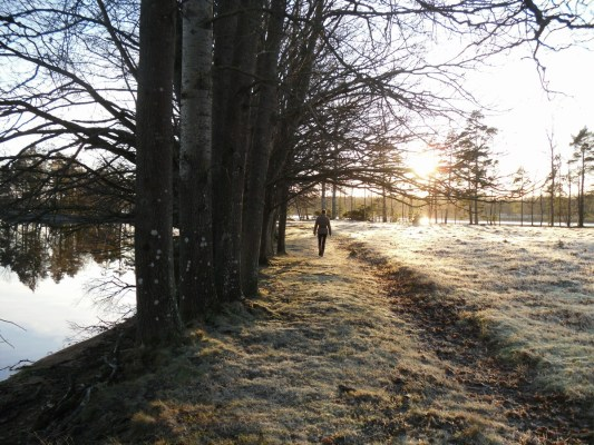 på vintern - en promenad i Sveriges natur