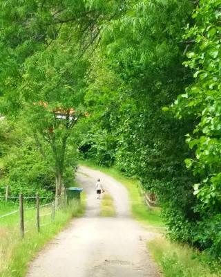 Övrig - Vägen till stugan