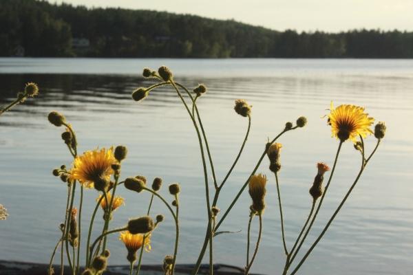 på sommaren - Utsikt över Kyrksjön