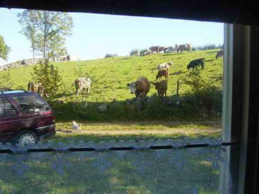 Övrig - Utsikt över äng med kor