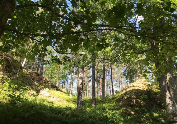 Ansicht Sommer - 18th century cottage