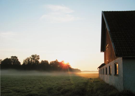 på sommaren - Tidig morgon