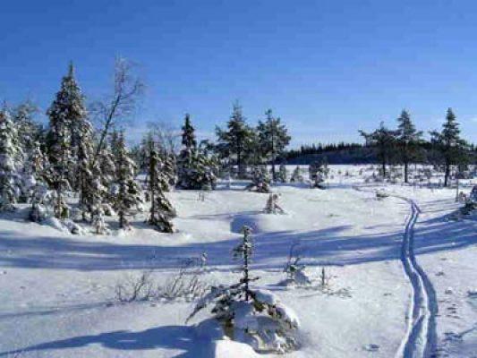 Övrig - vinterlandskap