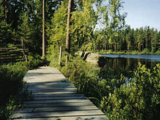 på sommaren - liten sjö nära stugan