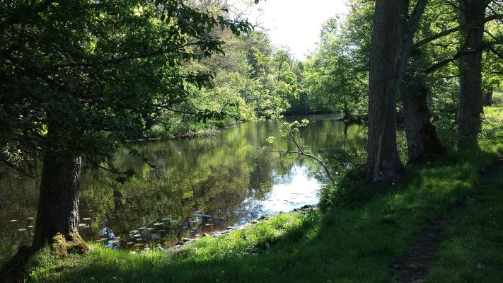 på sommaren - Underbar promenadstig som går längs Alsterån. Pataholm till Ålem, via Strömsrums gods.