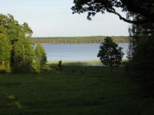 på sommaren - Utsikt från altanen!