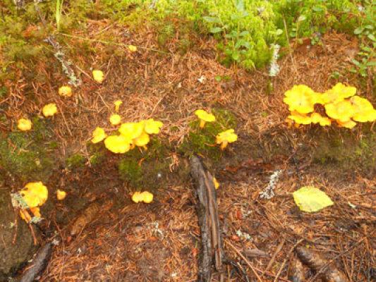 Övrig - svampmarker