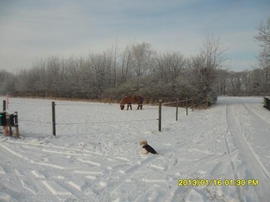 på vintern - Omgivning