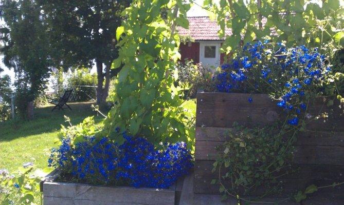 asset.ADDITIONAL_HOUSES - Blomterrassen med lillstugan (log cabin guest house) i bakgrunden