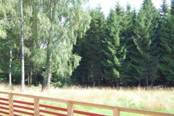 på sommaren - Skogen utanför fönstret!