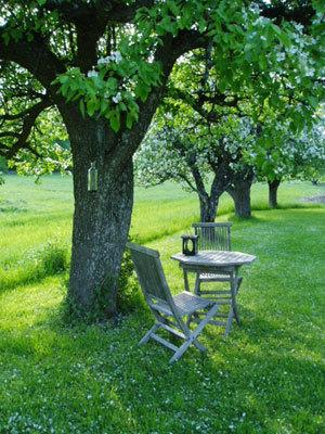 På sommaren - Äppelträden