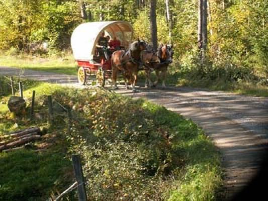 Övrig - Häst och vagn