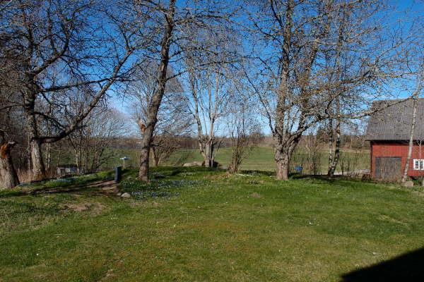 på sommaren - Utsikt från köksfönstret med körsbärsträd i bakgrunden.