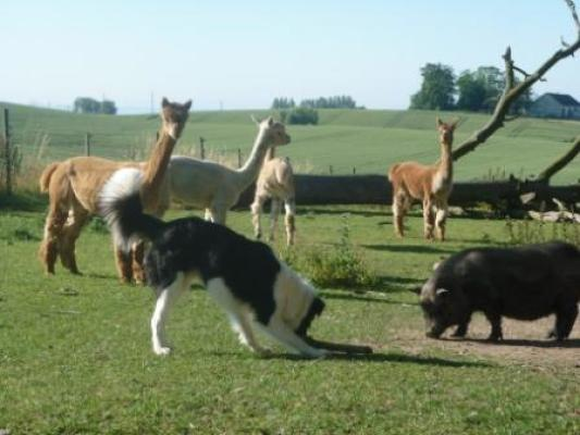 Övrig - Djuren på gården