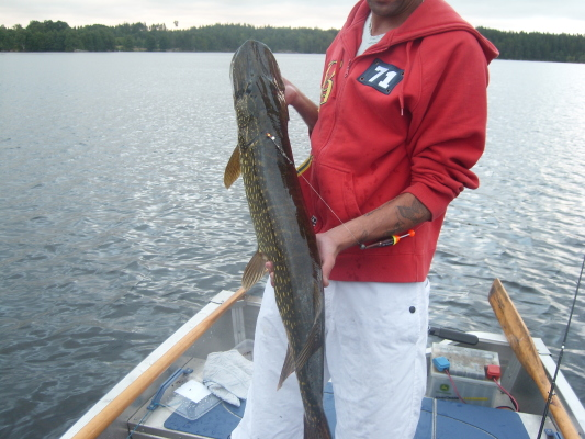 Övrig - 8kg i Järvasjön