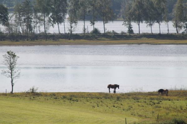 på sommaren - Fin utsikt från huset, i Hjärtaredssjön kan man både fiska och bada.