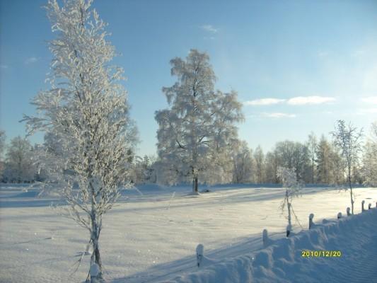 på vintern - vinteridyll